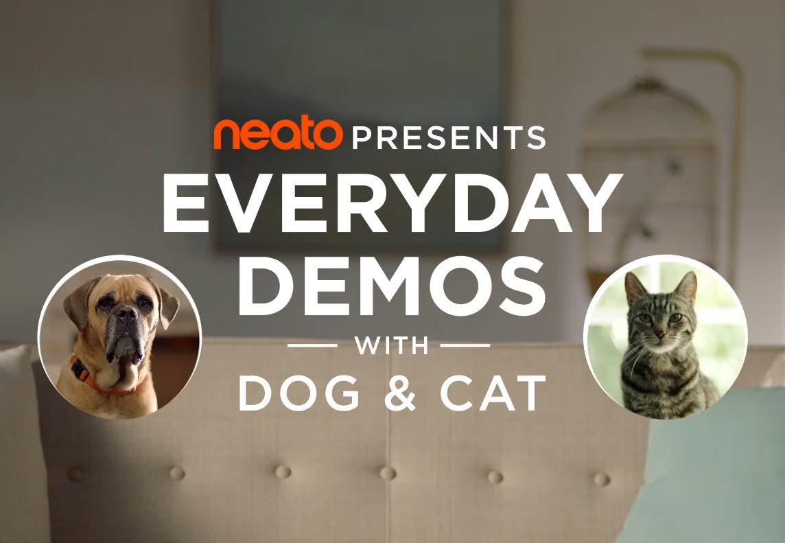 Everyday Demos with Dog and Cat
